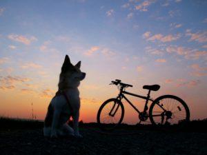 電動バイク、電動自転車を充電時間・走行可能距離から比較してみた